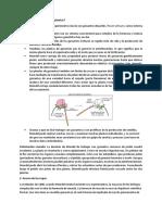 Investigacion Biologia Mendel