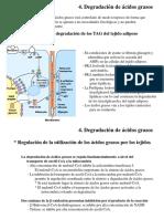 Ciclo Del Acido Citrico III