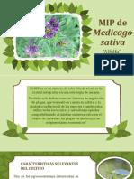 MIP de Medicago Sativa