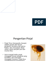 All About Pinjal