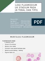 Morfologi Plasmodium