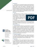 brucella_abortus-es.pdf