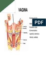 Vagina (em inglês)