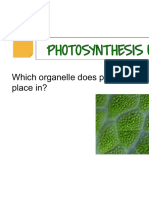 photosynthesis task cards 2015 cp