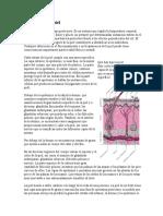 1 Cansion Guatemalteco y Un Poema y El Mapa de San Amrcos