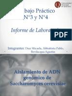 ADN Lipidos