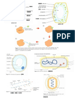 igcse biology essential diagram