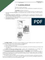 Tema02.2.Articulaciones