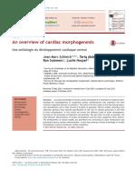 An Overview of Cardiac Morphogenesis