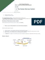 A&P Nervous System Notes