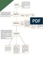 diagrama del desarrollo embrionario.docx