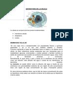 Estructura de la celula.docx