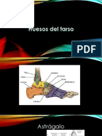 Anatomia Huesos Del Carpo