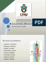 Anatomia UPAV