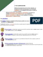Tipos de Frutos y Su Clasificacion