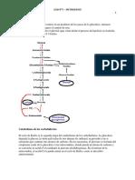 Guia 5 - V2 - Metabolismo