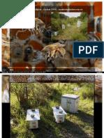 Sambos Bee Farm page