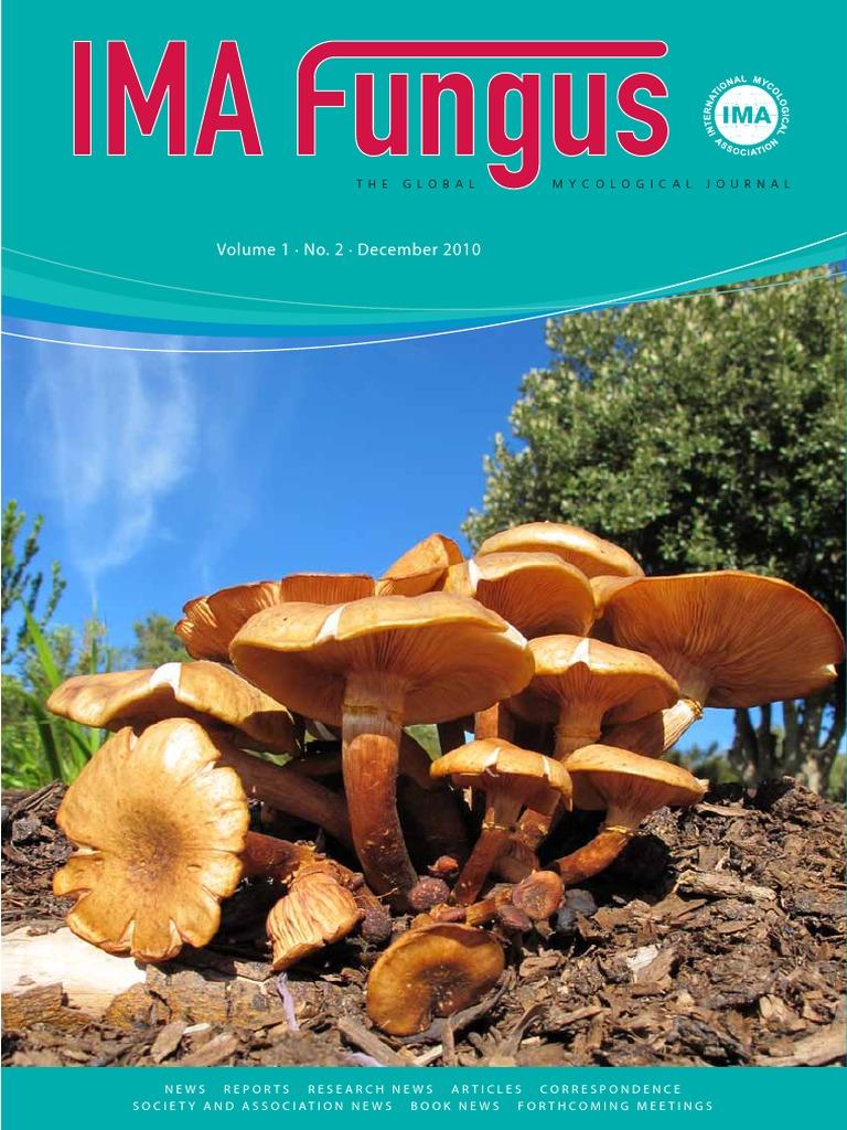 Psychedelic Science Magic Mushrooms ZM Medicinaal