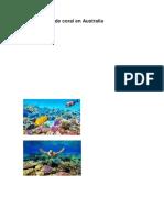Gran barrera de coral en Australia.docx