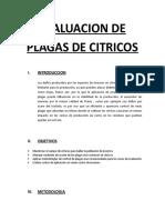 Evaluacion de Plagas de Citricos