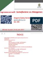 Gregorio Godoy Hernández Agrobacterium Tumefaciens vs Rhizogenes