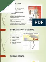 Clase 17 Neurologia
