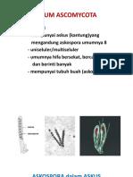 RPS dan Bahan kuliah Mikologi.pdf