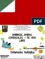 Amibiasis y Amebas de Vida Libre 2 (1)