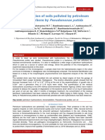 Bioremediation of soils polluted by petroleum hydrocarbons by Pseudomonas putida