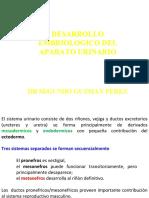 embriodeurinario-101015233011-phpapp01