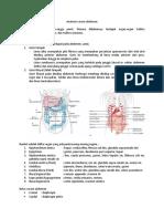 Anatomi_cavum_abdomen.docx