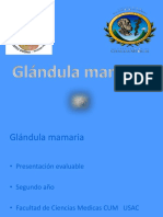 Clase Virtual de Glandula Mamaria Semana