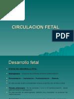 Desarrrollo Fetal