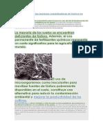 La importancia de las bacterias solubilizadoras de fósforo en agricultura