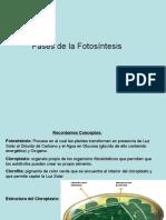 PPT 3ª Unidad, clase 2, Fases de la Fotosíntesis