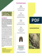 Forni, Paolo - Archeologia Dei Misteri (Doc)