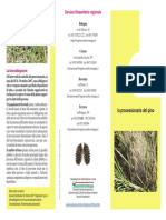 Brochure Informativa Processionaria