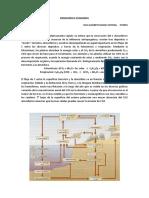 CICLO de los BIOELEMENTOS C-H-O-Agua.pdf