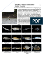 649_peces_de_santa_rosa_Guainia.pdf