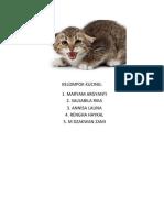 kelompok kucing