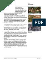 Ziziphus_mauritiana.PDF