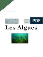 Algues Word