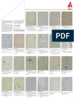 Poster Urine Sediment_GB