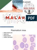 Plasmodium Malaria Praktikum Parasit