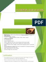Clove and Eucalyptus