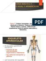 cintura escapular y  pélvica.pdf
