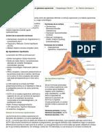 Fisiopatología de Los Trastornos de La Glándula Suprarrenal