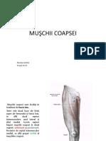 MUŞCHII COAPSEI-Nicolae Andrei (1).pptx