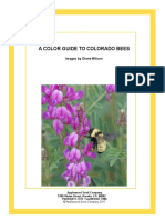 Guide to Colorado Bees