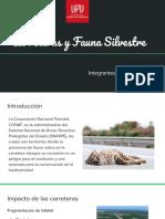 Carreteras y Fauna Silvestre